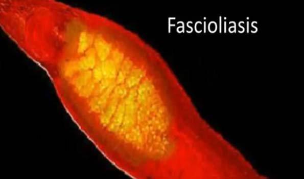 a fascioliasis megjelenése a világon