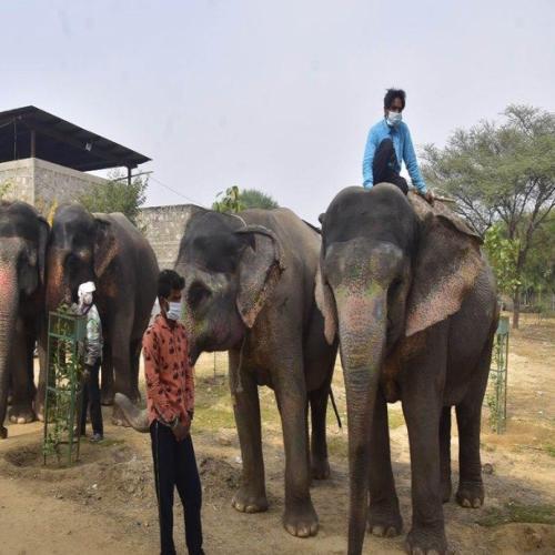 Jumbos of Jaipur get Veterinary Service