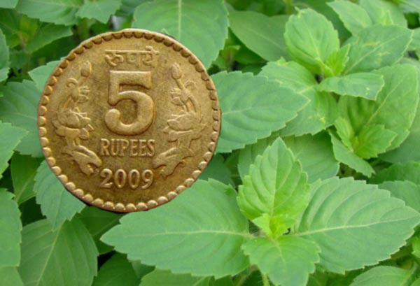 5 rs coin and tulsi