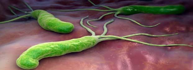 Image result for पेट के कीड़े
