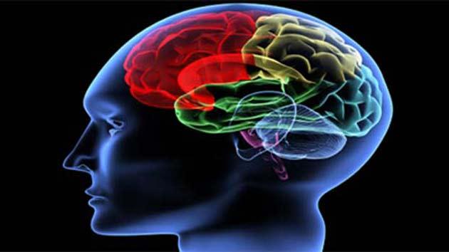 Image result for मस्तिष्क विकार