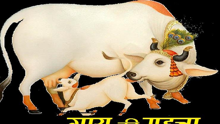 importance Of Cow