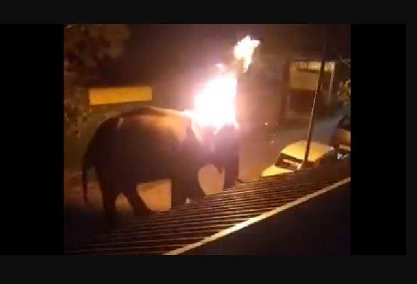 Elephant Dies Burning