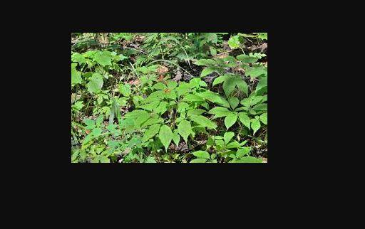 Medicine plants