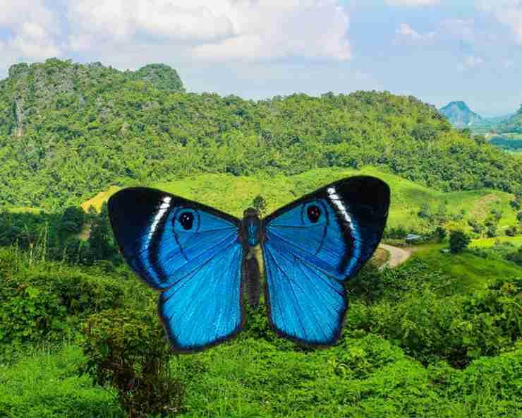 butterflies feng shui