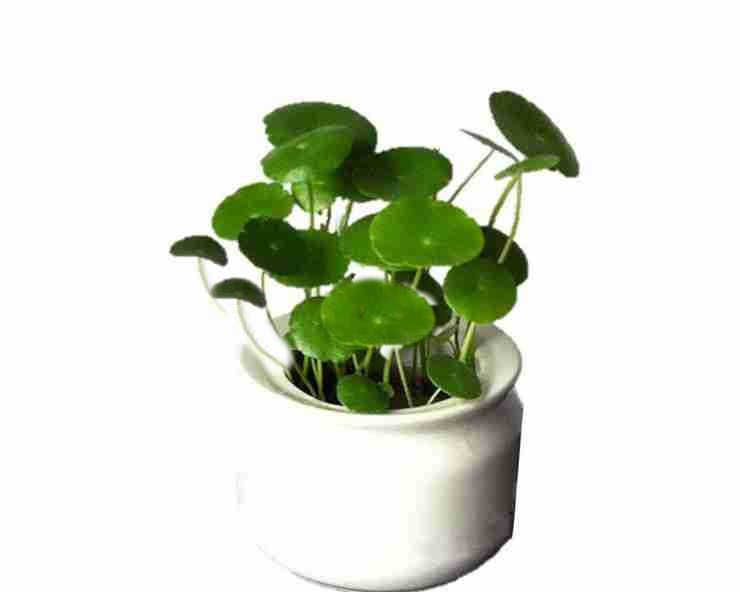 Coin Plant