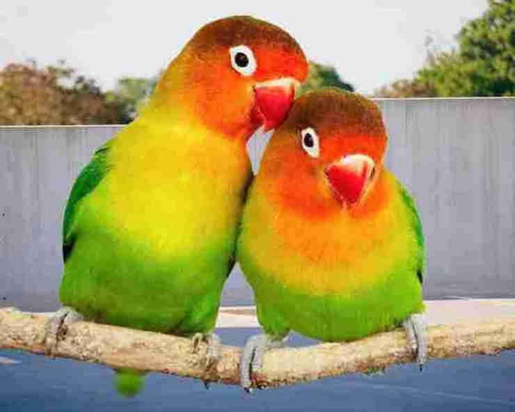 Feng Shui Love Bird