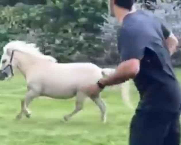 धोनी ने घोड़े के साथ लगा दी रेस, सोशल मीडिया पर वायरल हुआ वीडियो