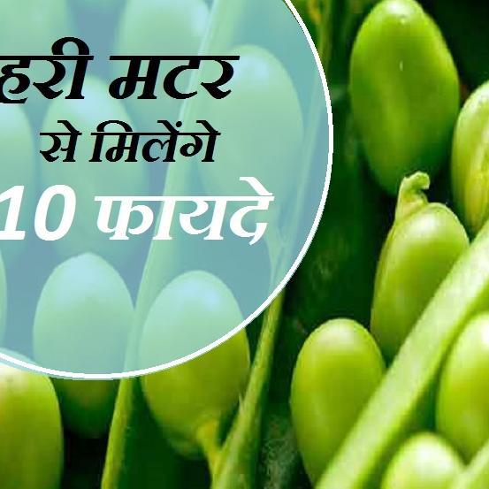 क्या आप जानते हैं हरी मटर के 10 बेहतरीन लाभ के बारे में