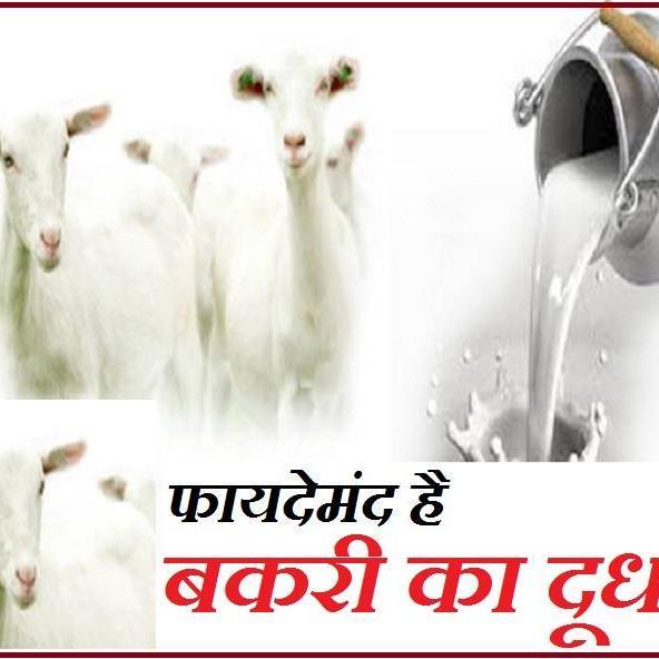 बकरी के दूध में मौजूद पोषक तत्व, रखेंगे बीमारियों से दूर, जानें 10 फायदे