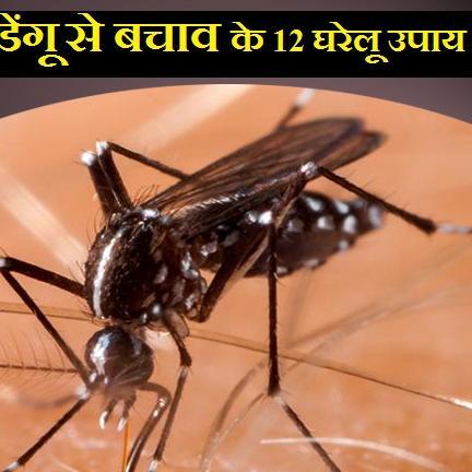हड्डीतोड़ बुखार, डेंगू से बचाव के लिए अपनाएं ये 12 घरेलू उपाय