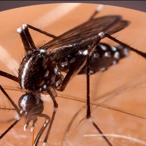 बारिश के मौसम में डेंगू से ऐसे रहे 'सतर्क', जान लीजिए लक्षण और बचने के तरीके