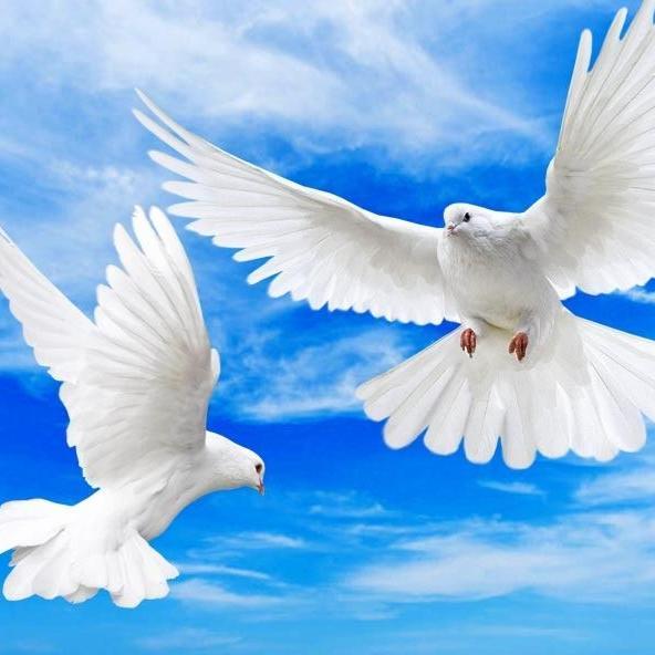 अंतरराष्ट्रीय शांति दिवस : कब और क्यों मनाया जाता है?