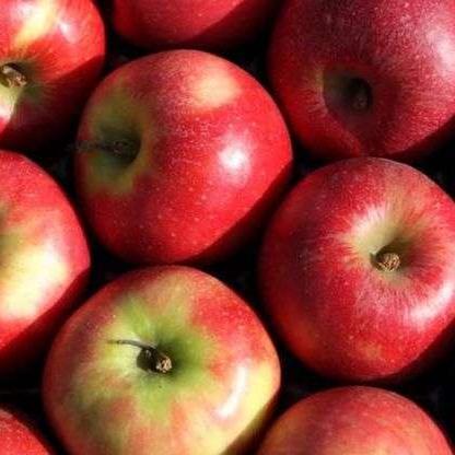 side Effects of Apple- ज्यादा एप्पल खाने से शरीर को हो सकते हैं ये नुकसान