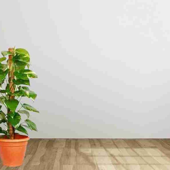 Vastu Tips : घर की उत्तर ईशान की दीवारों का रंग ऐसा रखें