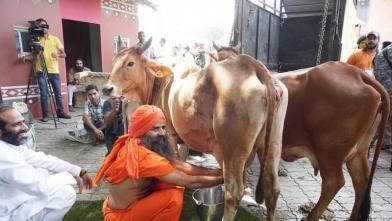 बाबा रामदेव ने खुद निकाला गाय का दूध