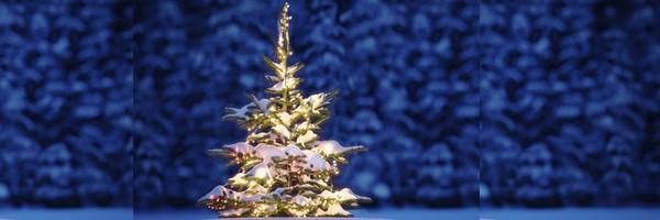 xmas decoration, xmas tree, xmas ക്രിസ്തുമസ്, ക്രിസ്തുമസ് ട്രീ