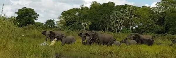 Elephant, crocodile, മലാവി, കുട്ടിയാന, ആനക്കൂട്ടം, കാട്ടാന, ആന