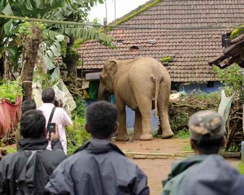 Podanur, Coimbatore, Elephant, ആന, പോത്തന്നൂര്, കോയമ്പത്തൂര്, മരണം