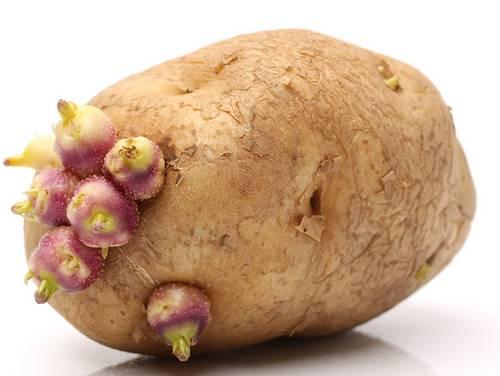 potato , food , kitchen , Potato curry , ഉരുളക്കിഴങ്ങ് , മുളച്ച ഉരുളക്കിഴങ്ങ് , ശരിരം, ആരോഗ്യം
