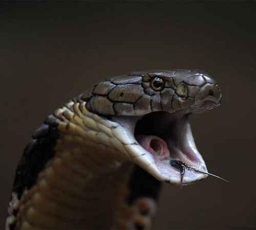 Humans Fear Snakes ,  Human , Fear , Snakes , പാമ്പ് , മനുഷ്യന് , പേടി , ഭയം
