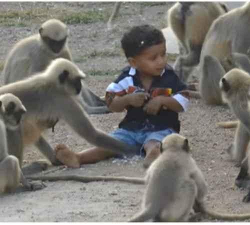 Friendship , MONKEYS , Child , Video , സൗഹൃദം , കുട്ടി , കുരങ്ങ് , വീഡിയോ