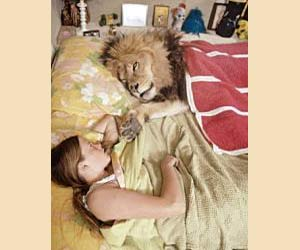 sleeping with lion