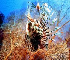 கரீபியன் பகுதியில் அழிந்து வரும் பவளப் பாறைகள்