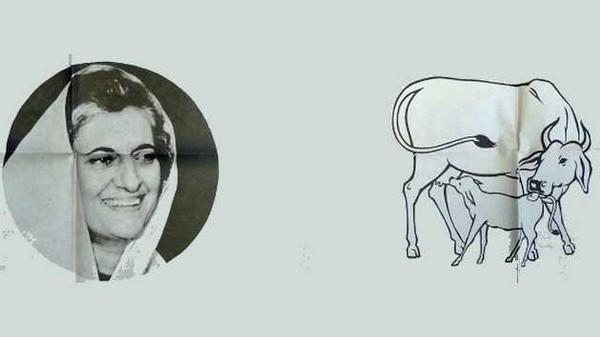Indira-cow-calf